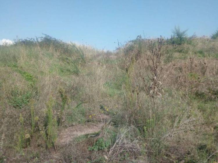 Terreno di 5000 m² in vendita a Roma
