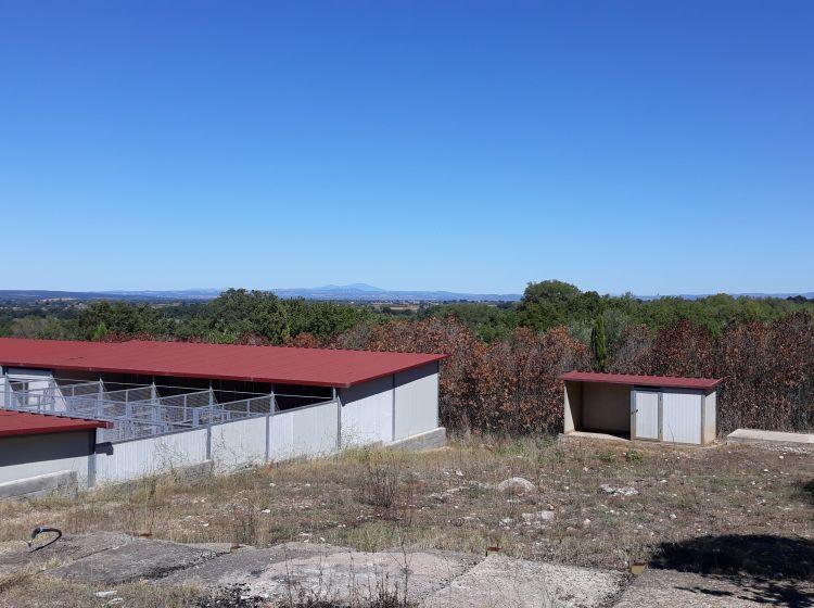 Azienda agricola in vendita, località Greppo Marino Snc, Blera